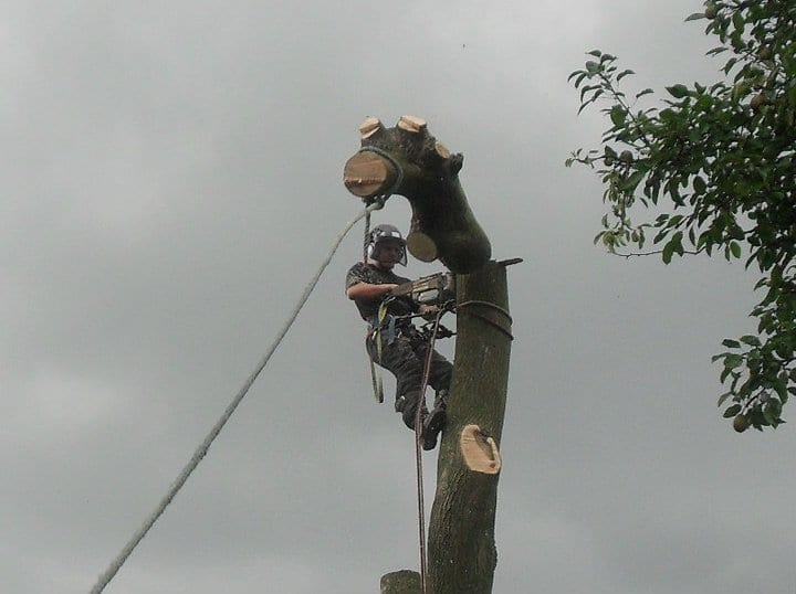 Tree surgeon dismantling large tree in scissett, huddersfield