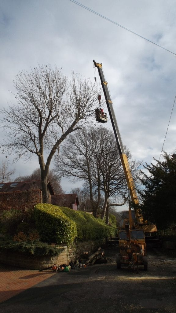 Tree removal using a crane conducted by tree surgeons